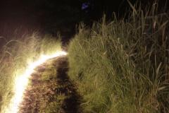 lys langs sti